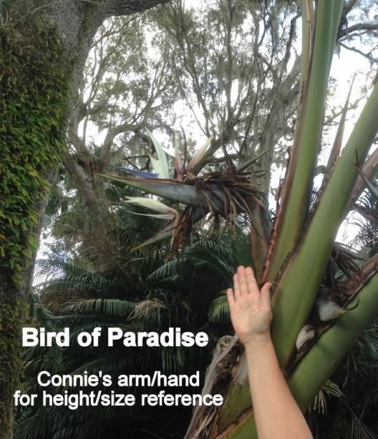 08 Bird of Paradise