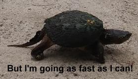 01 Turtle